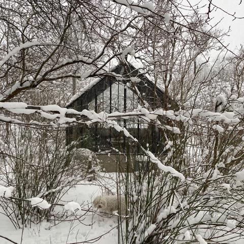 ett växthus på vintern