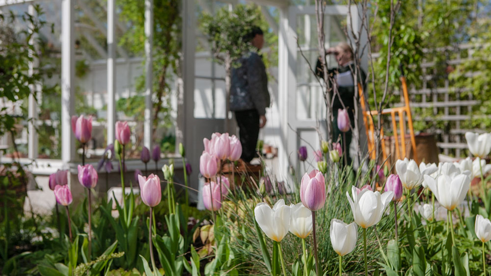 blommor framför ett växthus