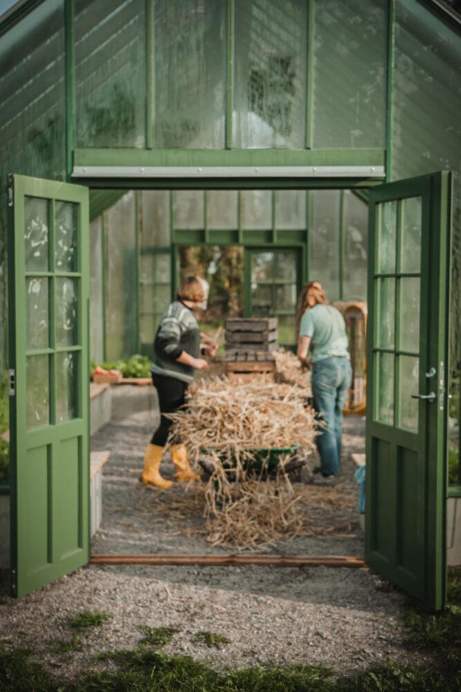 Två kvinnor arbetar i ett växthus.