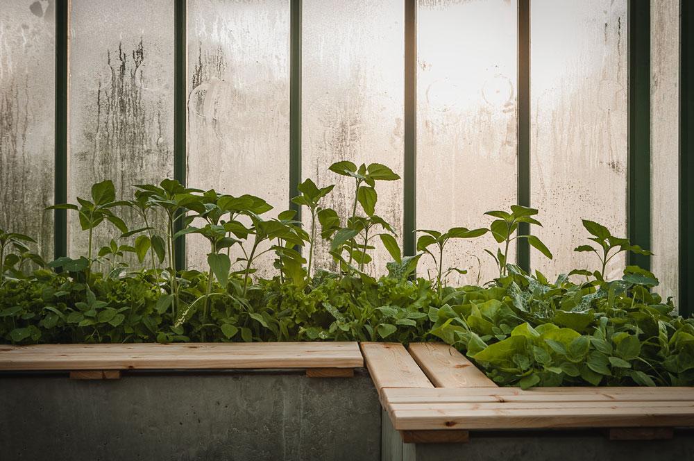 Gjuten odlingsbädd i växthus.