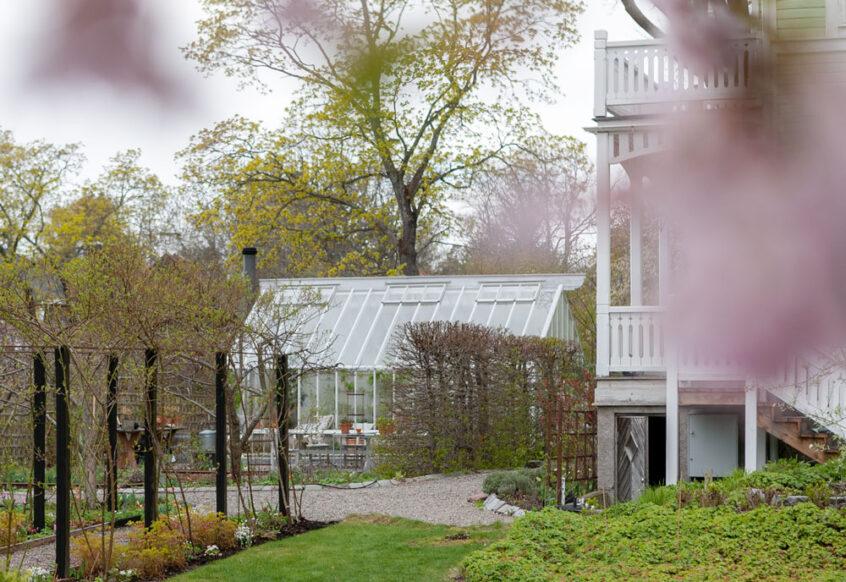 Vitt växthus bakom japanskt körsbär.