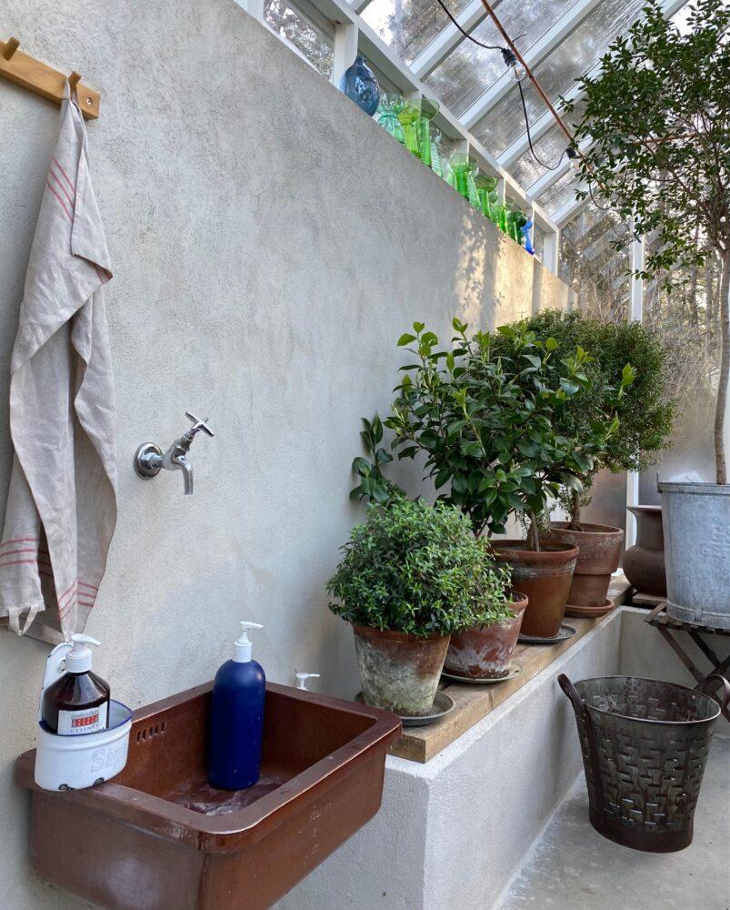 Gröna växter på rad ovanpå mur.