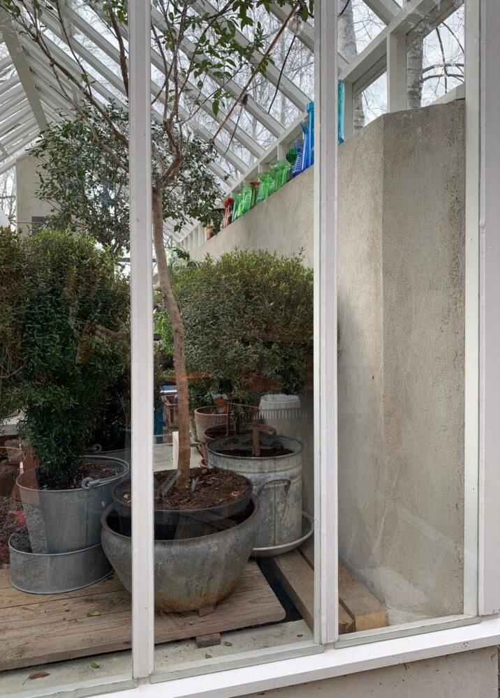 växter i växthuset