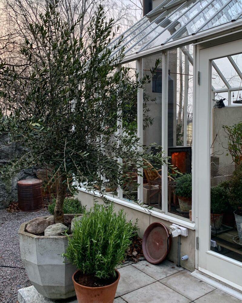 växter framför ett växthus