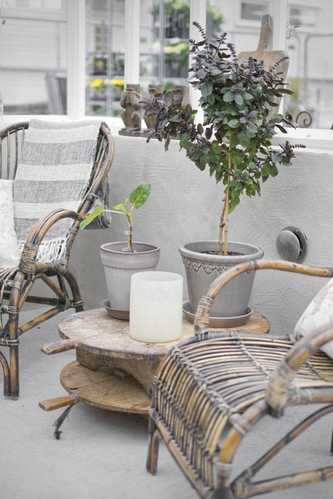 två stolar i ett växthus