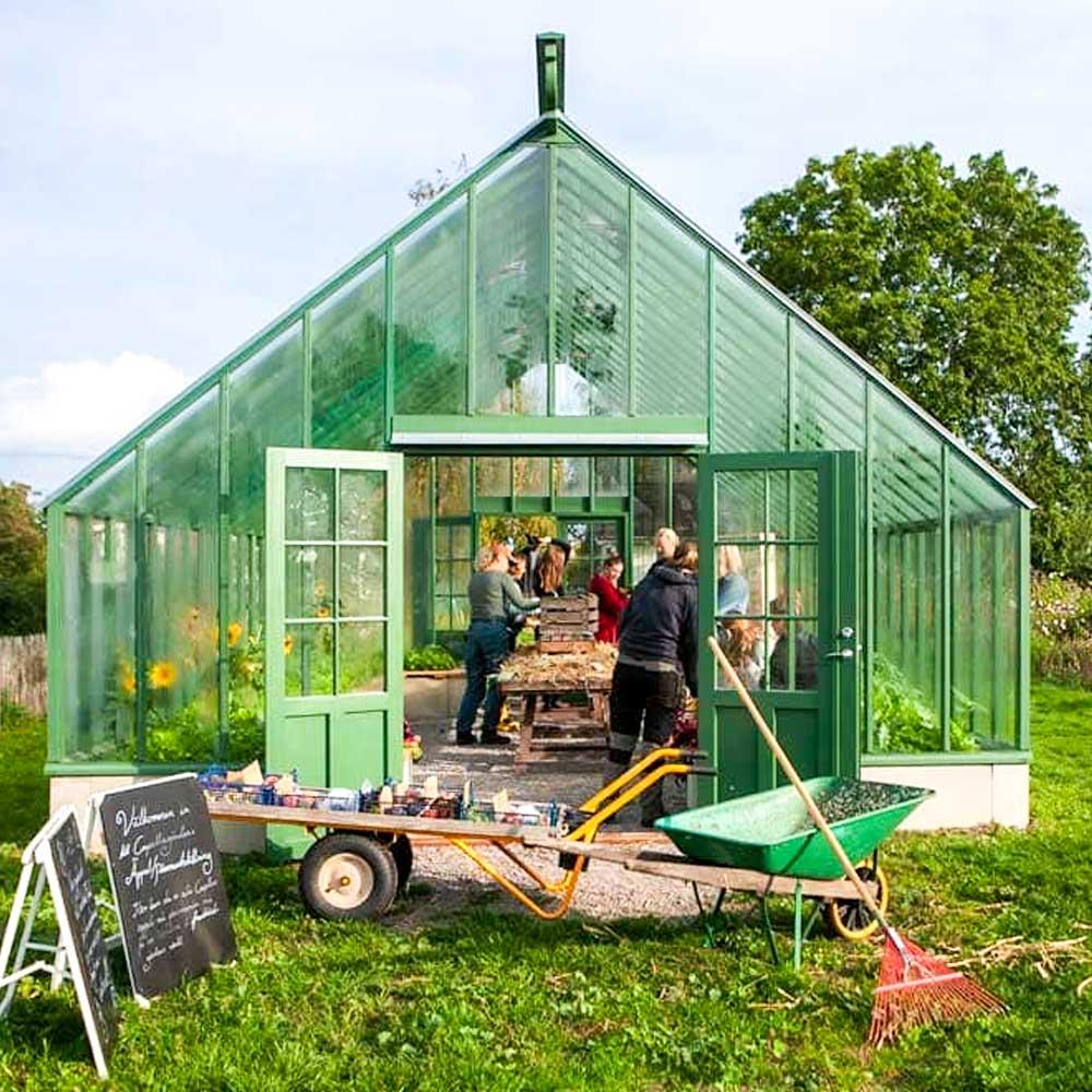 Kvinnor arbetar i växthus.