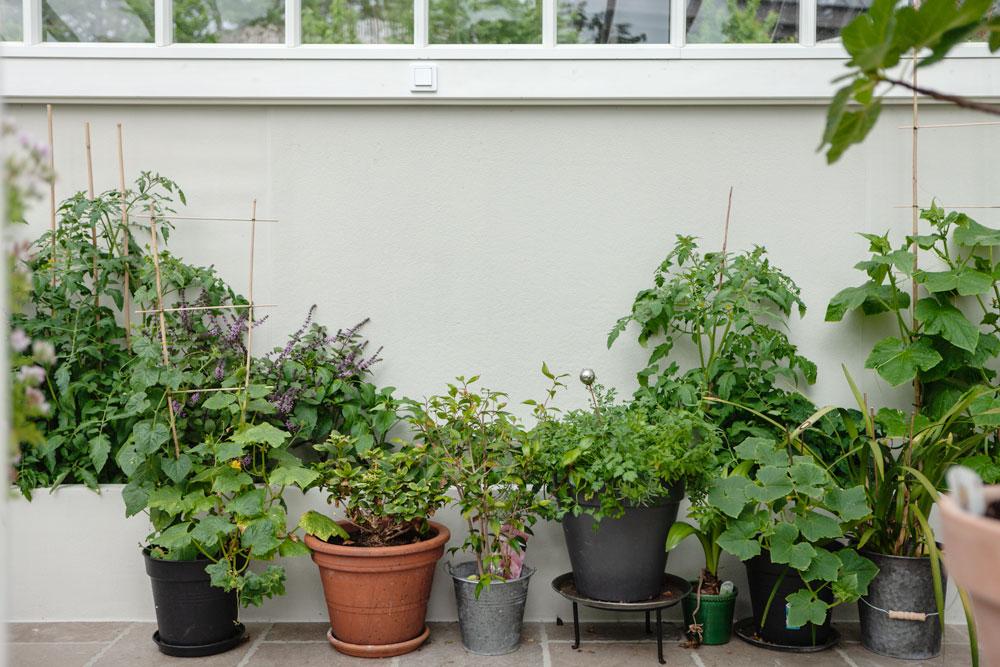 Växthus med stor takvinkel.