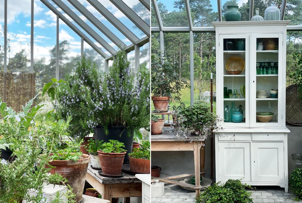 Krukodlingar i växthus