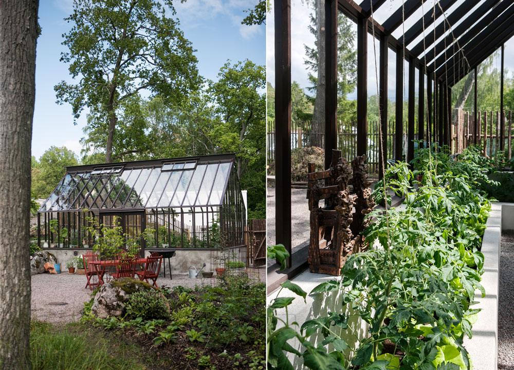 Växthus fyllt med citrusträd och tomater i jordbäddar.