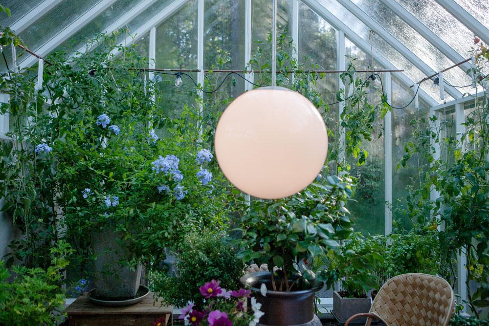 Vitt växthus i motljus en solig vinterdag.